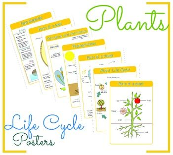 This product includes the following posters: 1.Plant life cycle; 2.Parts of a plant; 3.Photosynthesis; 4.Pollination and fertilization; 5.Parts of a seed; 6.Seed dispersal; 7.Parts of a flower. The posters can be printed in any size.