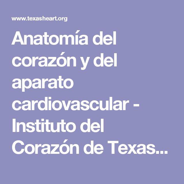 Anatomía del corazón y del aparato cardiovascular - Instituto del Corazón de Texas (Texas Heart Institute)
