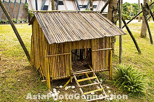 urban chicken coop asia - Google Search