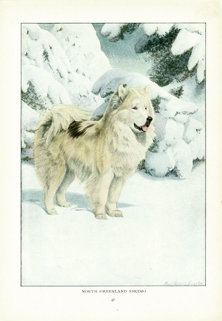 1919 Illustration L. A. Fuertes Chien Esquimau Peinture animalière Chien de traineau début 20ème Peintre américain de la boutique sofrenchvintage sur Etsy