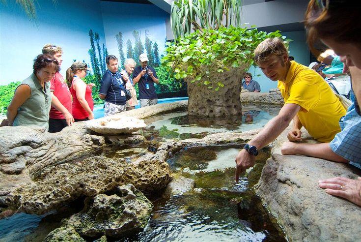 Noumea Aquarium & Lemon Bay   Shore Excursion   Carnival Cruise Lines Australia