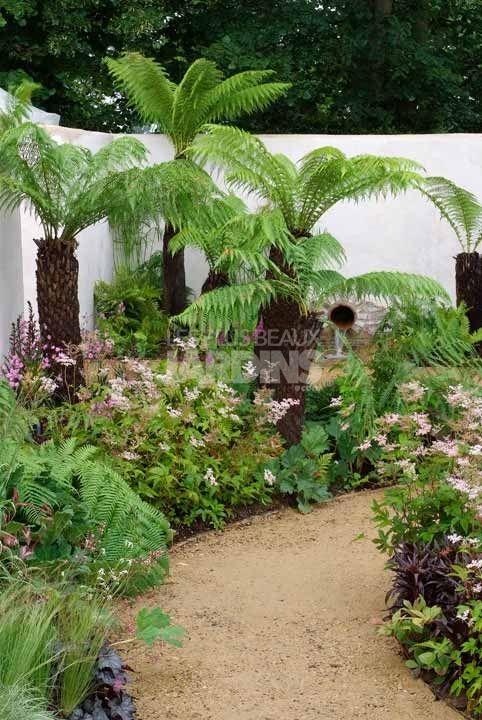 Dicksonia antarctica courtyard garden design plantlist - Jardin devant maison ...