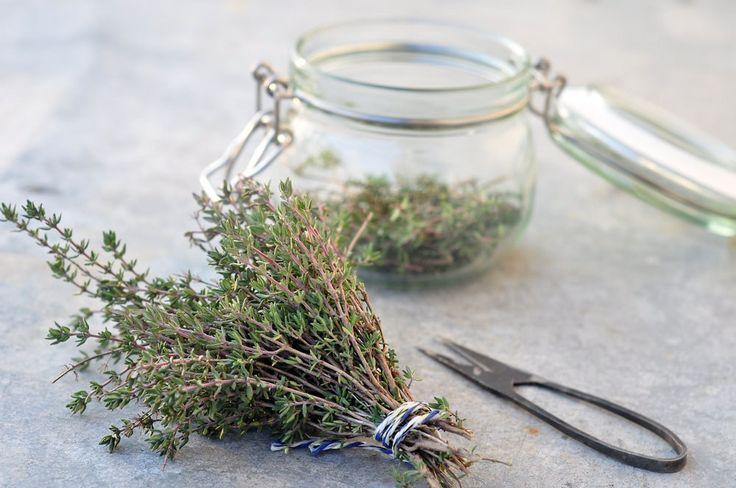 Winterzeit ist Hustenzeit. Heute zeigen wir euch ein einfaches Rezept für einen selbst gemachten Thymiansirup. Dieser ist ein wahrer Hustenkiller und schmeckt außerdem noch sehr lecker.Thymian ist sehr gut verträglich und wirkt schleim- und krampflösend… Read More
