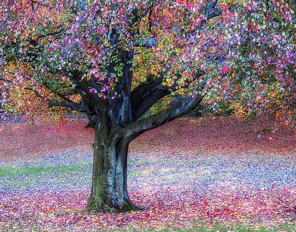 Autumn Pastel Impression