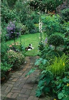 Brick Pathway Leading To Secluded Lawn In Small Town Garden With Standard  Solanum Rantonnetii On Left