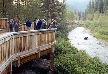 Photograph of Fish Creek wildlife viewing platform with people leaning on the railing watching a bear in the stream below. [Near Hyder, Alaska - $10/day, day use only.