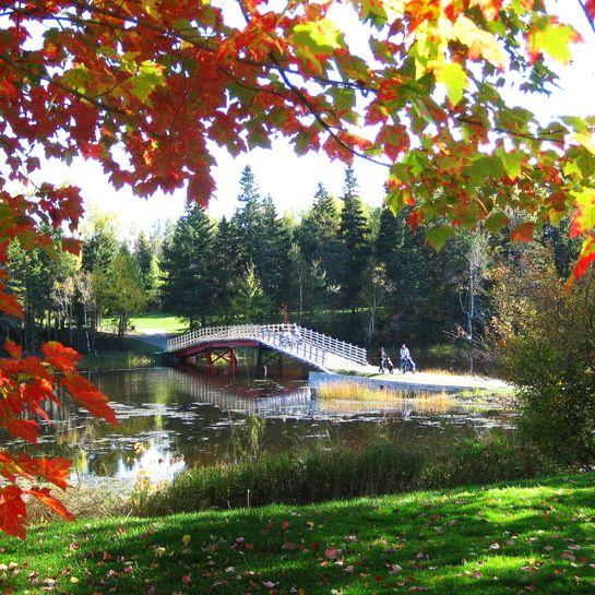 Fall at Pine Needles Golf