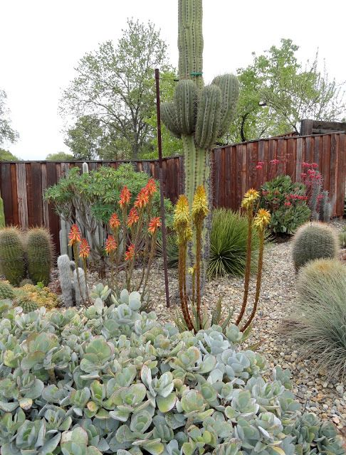 436 Best Desert Landscaping Ideas Images On Pinterest | Desert Gardening,  Cacti Garden And Desert Landscape