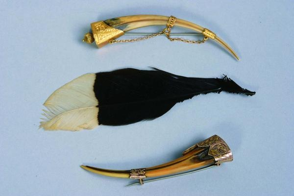 The Beaks and Tail Feathers of the Huia Bird now Extinct. I feel sad.