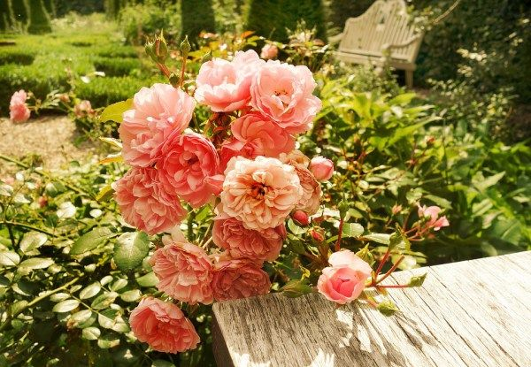 I love gardening, and when the sun is shining, I'm always out, seeing what I can do to improve my yard. Most of the time, it's little things such as pulling up the weeds from between the paving. Or…