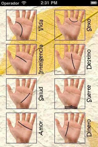 Las lineas de tu mano
