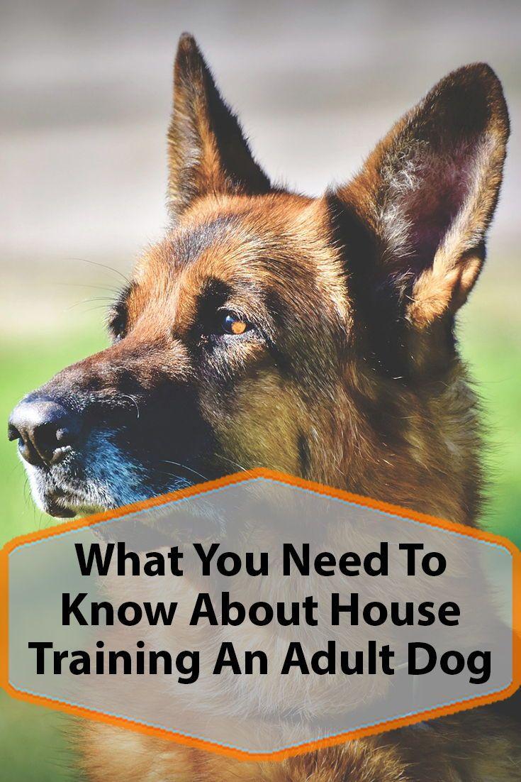 House Training An Adult Dog Dog Training Dogs Dog Mom