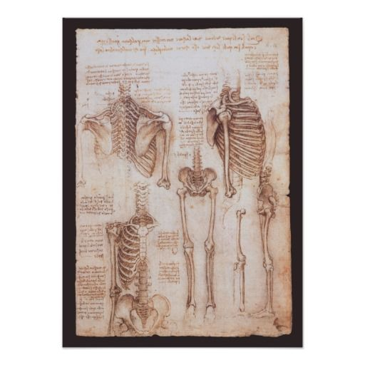 Study of Skeletons (c. 1510). Artist: Leonardo da Vinci (1452-1519). This sketch or drawing is a vintage Renaissance fine art science painting featuring several skeletons of the human body from a couple of views. Ribs, ribcage, arms, legs, femurs, tibia, pelvic bones, spine, spinal column, etc.<br><br>Sketch from one of Leonardo da Vinci's many journals. Leonardo kept a series of journals in which he wrote almost daily, as well as separate notes and sheets of observations, comments and plans…