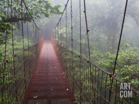 Cost Rica Monteverde Eco Tourism Canopy Walkway in Cloudfores Photographic Print by Christer Fredriksson at Art.com