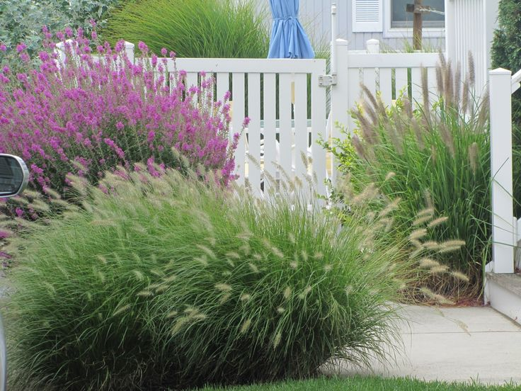17 best images about landscape on pinterest gardens portland maine and shrubs - Garden design using grasses ...