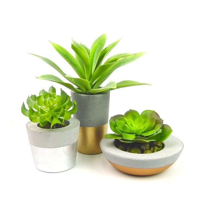 Beautiful!  Set of 3 metallic dipped concrete succulent planters, on grey base.  Available now at www.ifoundlove.com.au   (http://www.ifoundlove.com.au/concrete-pot-set-grey-metallic/)