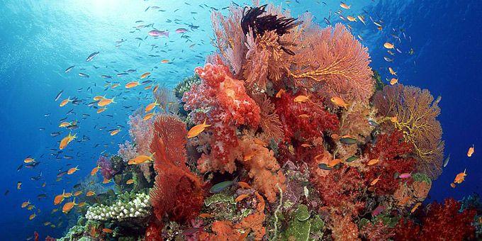 Γήινη σύνθεση με ζωγράφο... τον ωκεανό -   Φωτογραφική μαγεία από τους βυθούς των ωκεανών