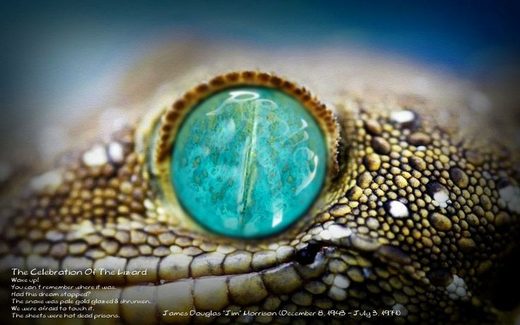 the eye of the lizard!replica bijoux