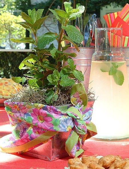 O vasinho com ervas vai até para a mesa. Aqui, ele está embrulhado com um pedaço de tecido para dar bossa