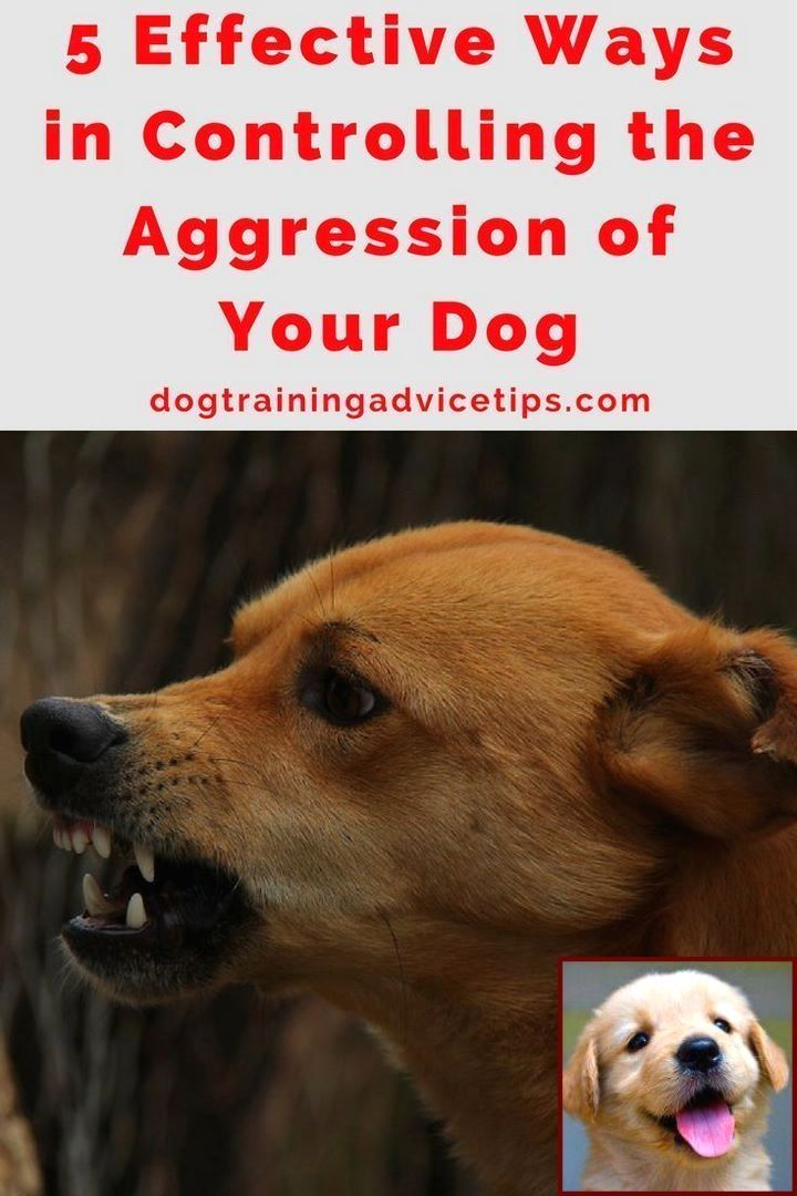 Dog Behavior Training Classes Near Me And Clicker Training For