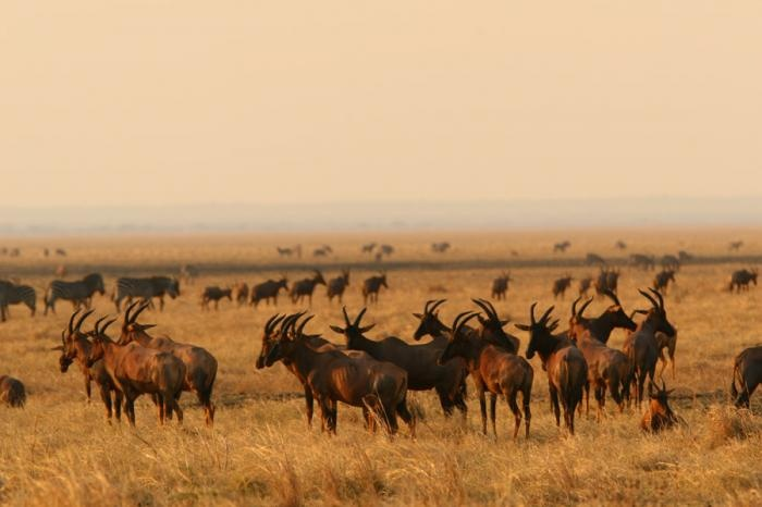 #hartebeest and #zebra across the savannah  | Holidays in Tanzania | Mbali Mbali Lodges and Camps