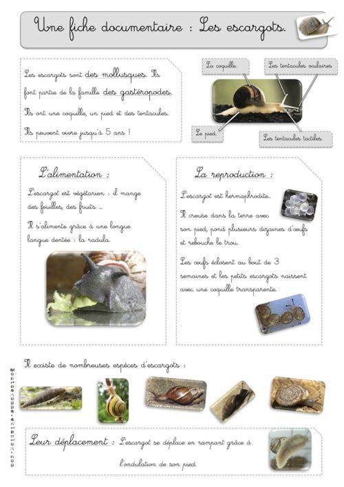 Les escargots - fiche documentaire - CE1 Et plein d'autres documentaires