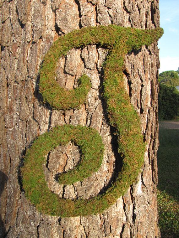 what is a tree trunk covered with 4 letters letter love this moss covered letter on the tree trunk so