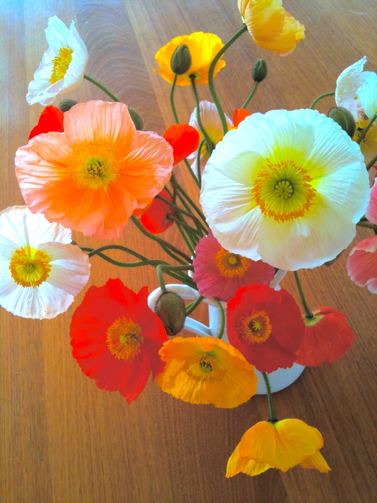 poppies in spring..... my latest inspiration