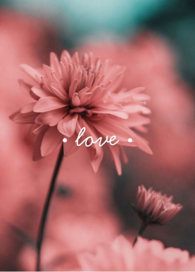 Love Image 722 X 1008 Cute Wallpapers Flower Wallpaper Phone