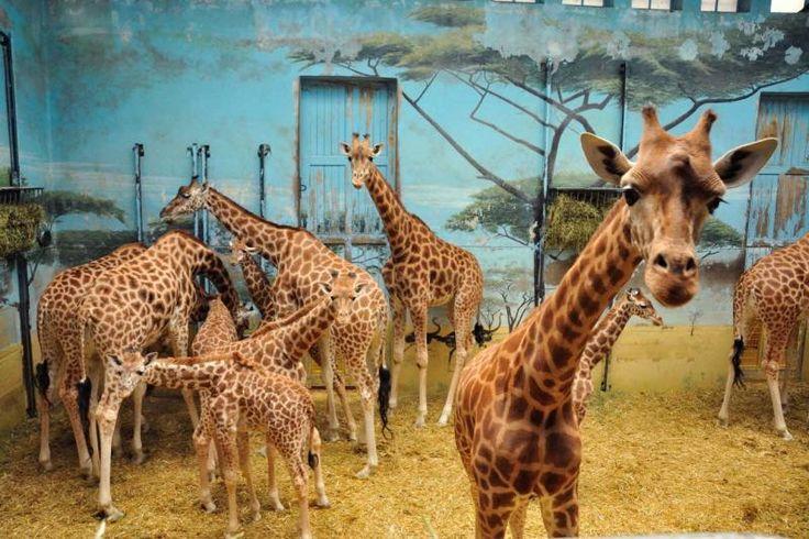 Wiedereröffnung des Parc zoologique de Paris (auch Zoo de Vincennes) am 12. April 2014. / Réouverture du Parc zoologique de Paris (anciennement Zoo de Vincennes) dès le 12 avril 2014.