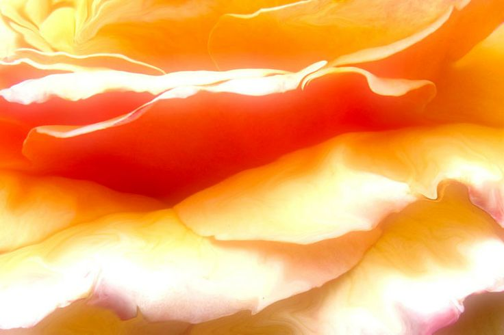"""""""Rose Petal Sunrise""""   I am intrigued by holographic nature of the universe where the sunrise is part of the rose's petals. The sun births forth into a new morning as the rose opens up to the new day. The one lives within the other. This surreal impression is expressed in this art piece."""