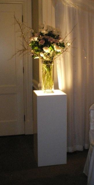 #lightbox #freshflowers
