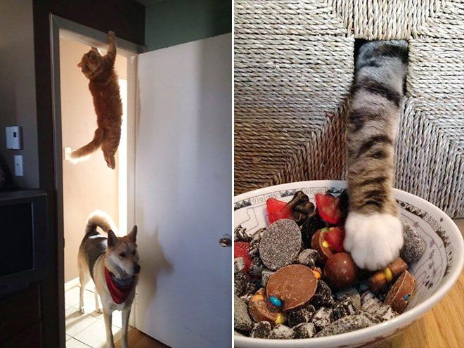 ninja gato Cultura Inquieta10