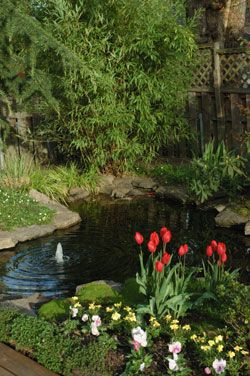 19 best convert pool to pond images on pinterest ponds for Convert koi pond to pool