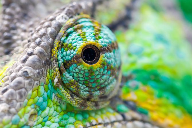 Auge eines Chamäleons! #Fotografie #makro #bunt #Natur