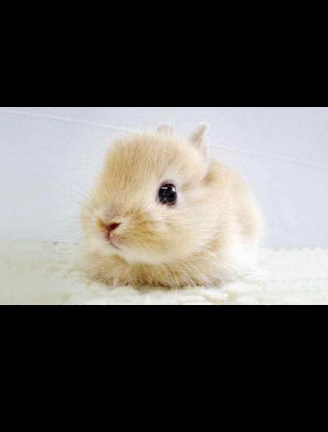 Best Social Animals Images On Pinterest Bunny Rabbit Animal - 28 cute baby animals will melt heart