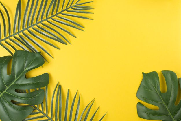 Verdant Tropical Plant Leaves Plant Leaves Plant Wallpaper Yellow Background Vector big green leaves of tropical monstera plant isolated on white background. verdant tropical plant leaves plant