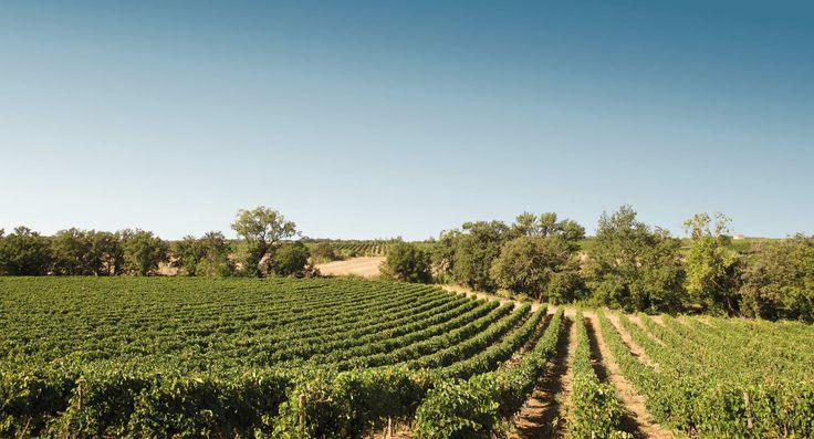 Imaginez un pique-nique chic dans les vignes, dans le sud de la france à Pézénas #SeigneurieDePeyrat #PiqueNiqueChic