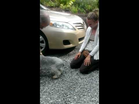Dog passes out from overwhelming joy - #YouTube