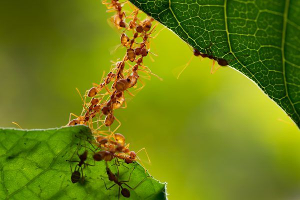 Homemade Pesticides To Get Rid Of Ants Ants In House Rid Of