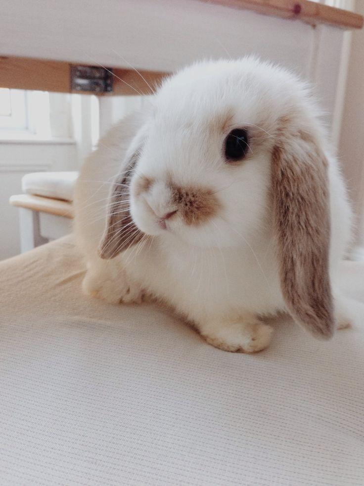 Самые милые кролики картинки много камень
