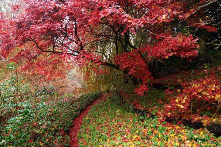 Den Japanska trädgården