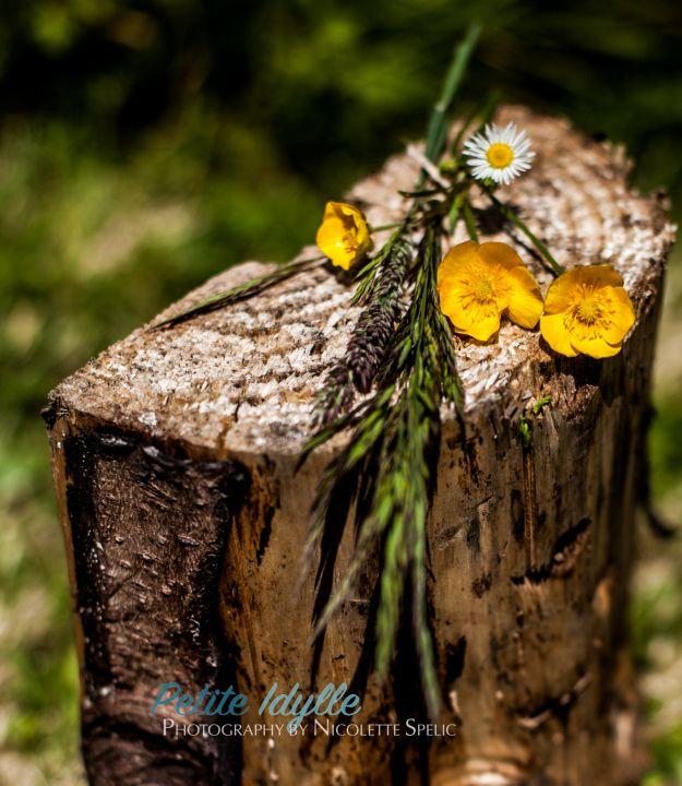 summer_garden-12