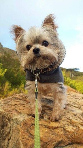 Leo on Table Mountain Cape Town