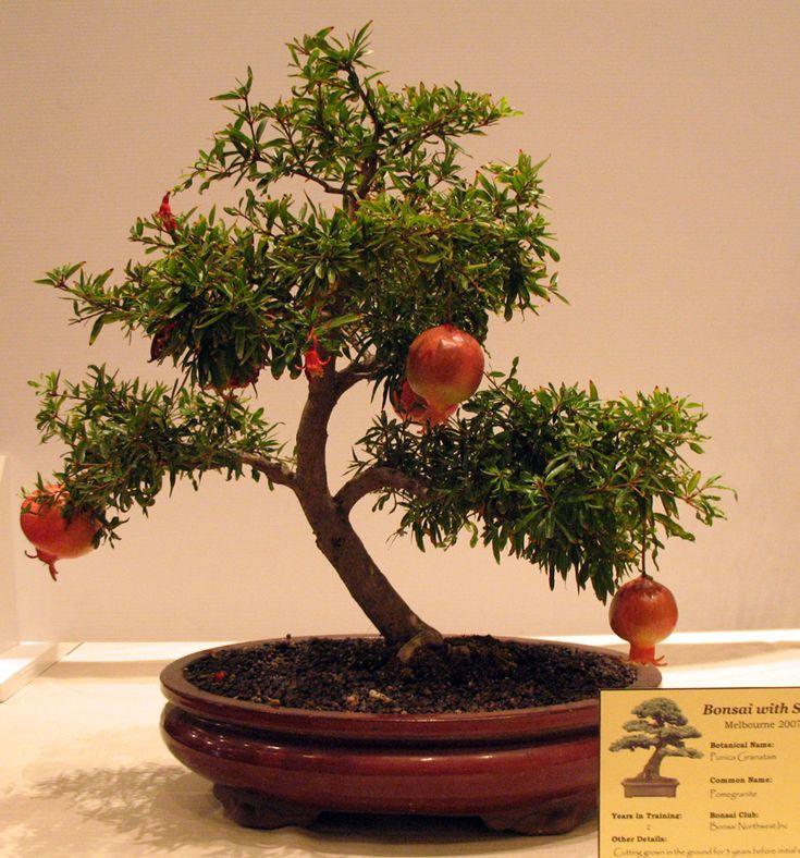 Basic Bonsai Book - Hanford Bonsai Society