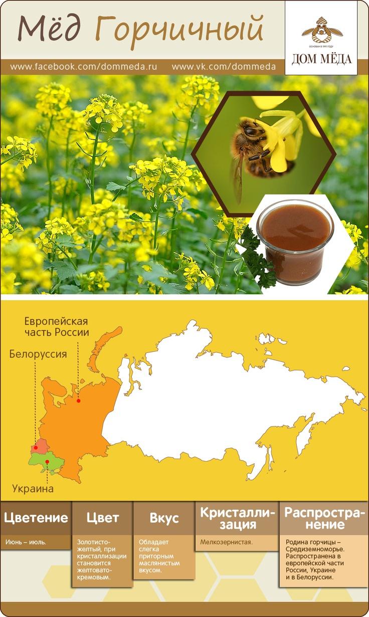 Инфографика: горчичный мёд