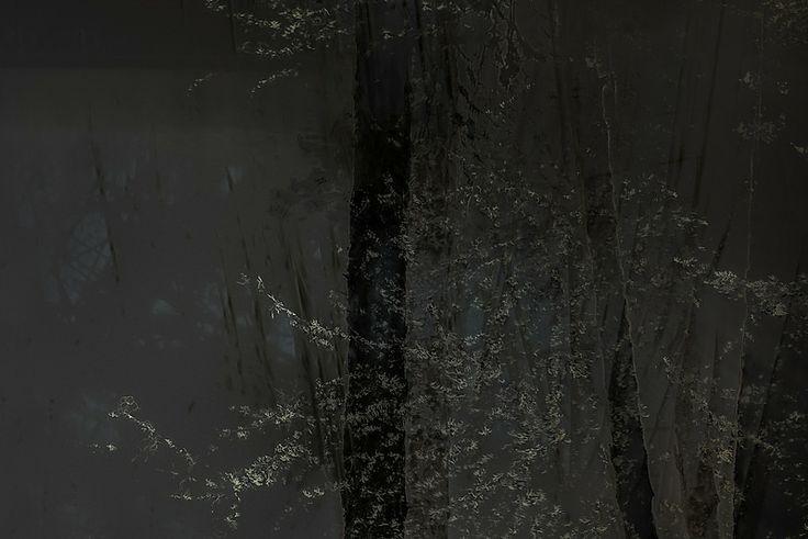 Of mist and lichen