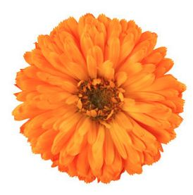 Love the #marigold -- the Oct birth flower often given as a sign of warm or fierce undying love! https://www.almanac.com/content/october-birth-flowers #OldFarmersAlmanac