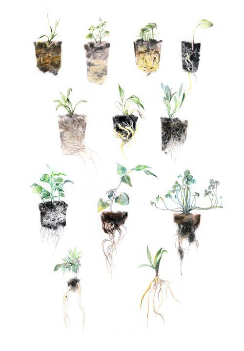 / Junyi Wu. via TSA #illustration #plants