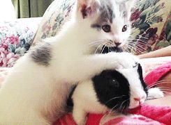 7 Best Cat Gifs of the Week – 25th October 2014